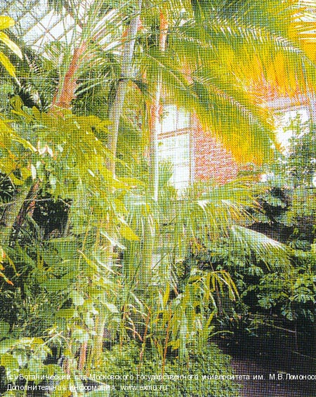 вечера знакомств метро ботанический сад